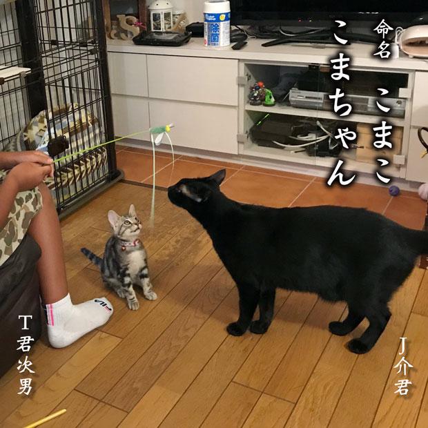 sumomo365_201809_komako_03.jpg