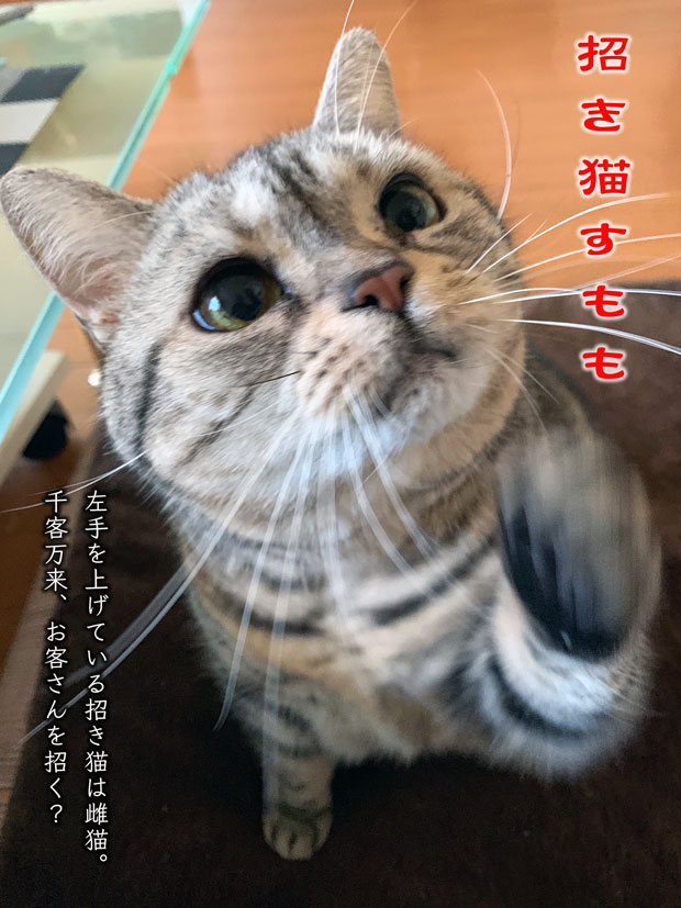 sumomo365_201901_Kand_Lucky_Cat00.jpg