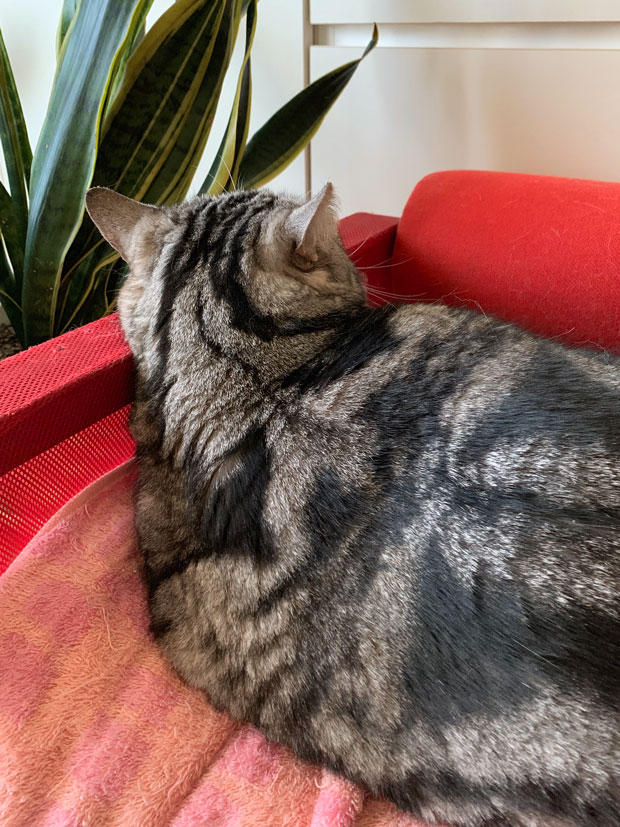 sumomo365_201901_Kand_Lucky_Cat07.jpg