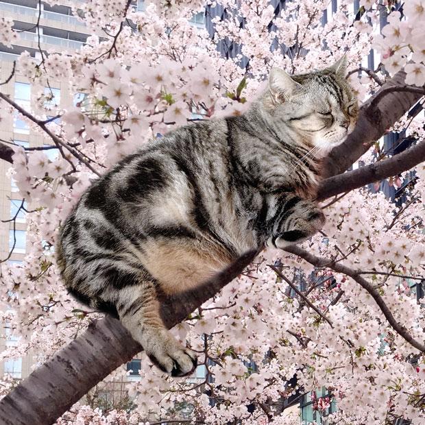 sumomo365_201903_Sakura_10.jpg