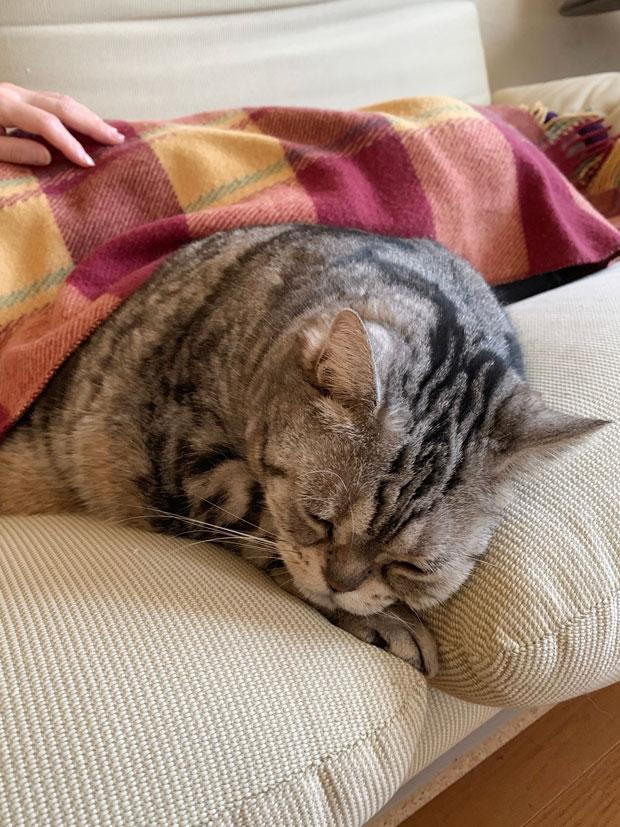 sumomo365_201904_Sleeping_00.jpg