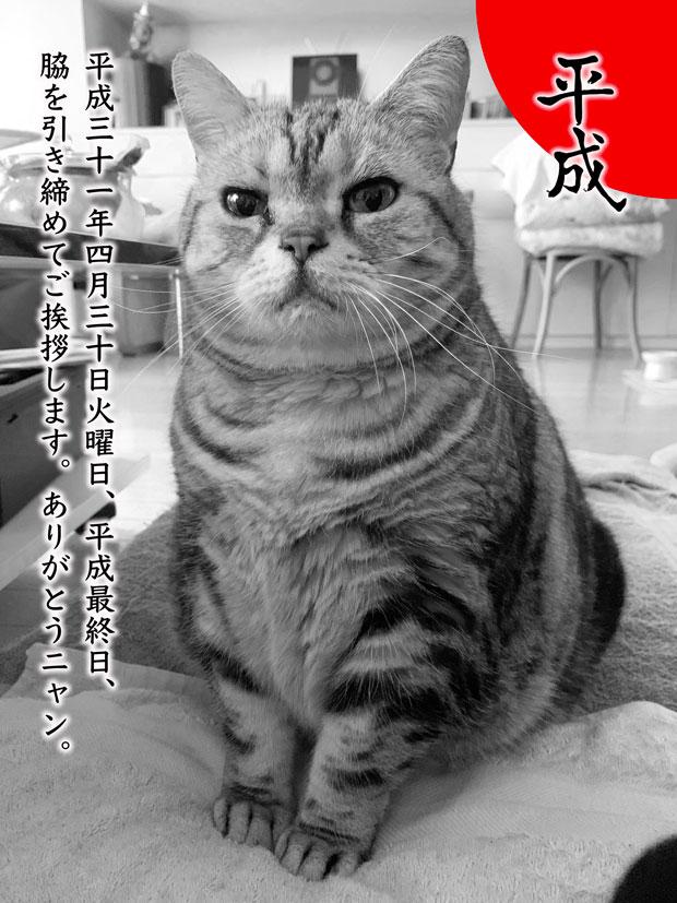 sumomo365_201904_nod_00s.jpg