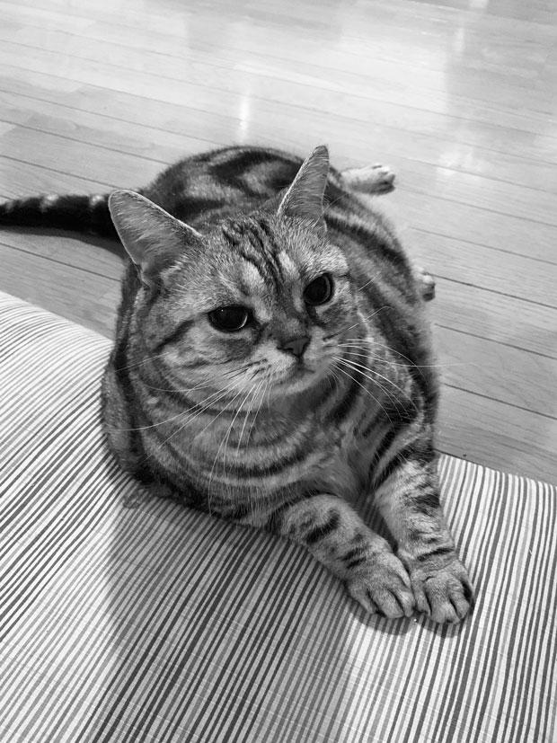 sumomo365_201906_nice_00.jpg
