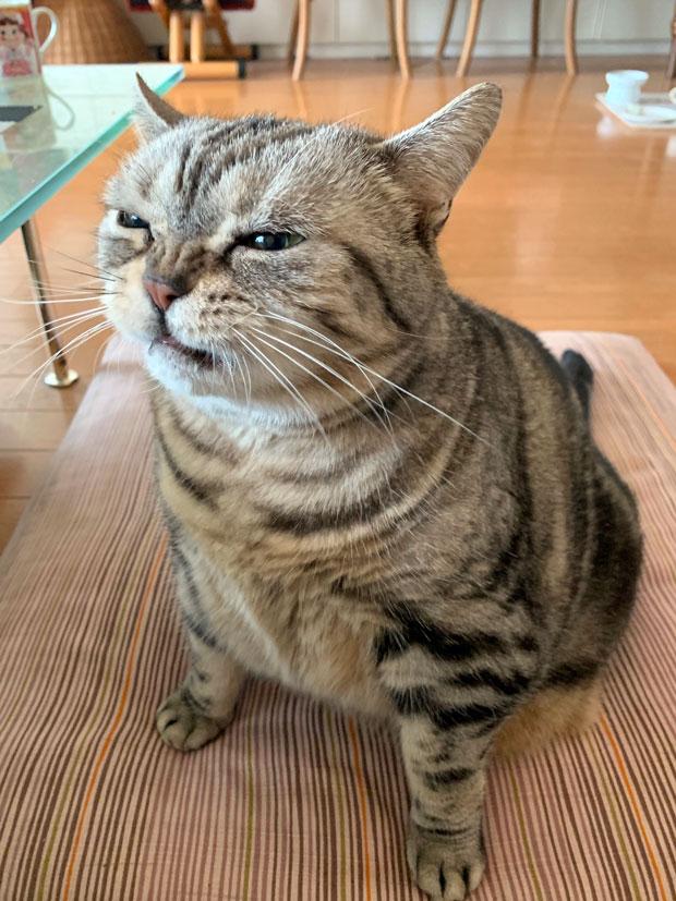 sumomo365_201906_wait_02.jpg