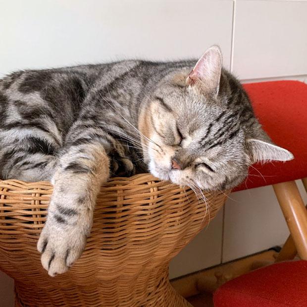 sumomo365_201907_Cat_drill_00.jpg