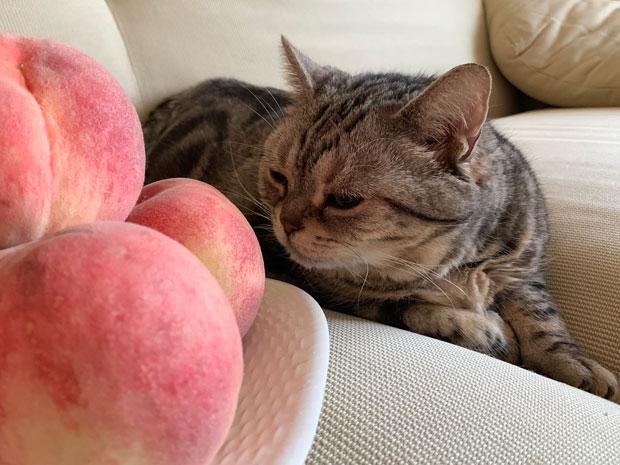 sumomo365_201907_Peaches_01.jpg