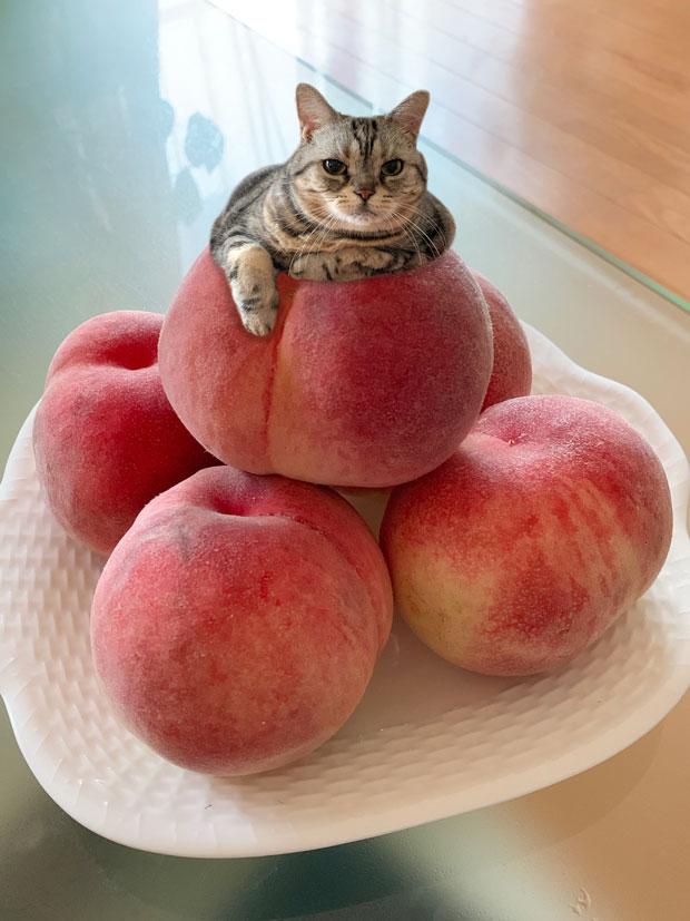 sumomo365_201907_Peaches_03.jpg