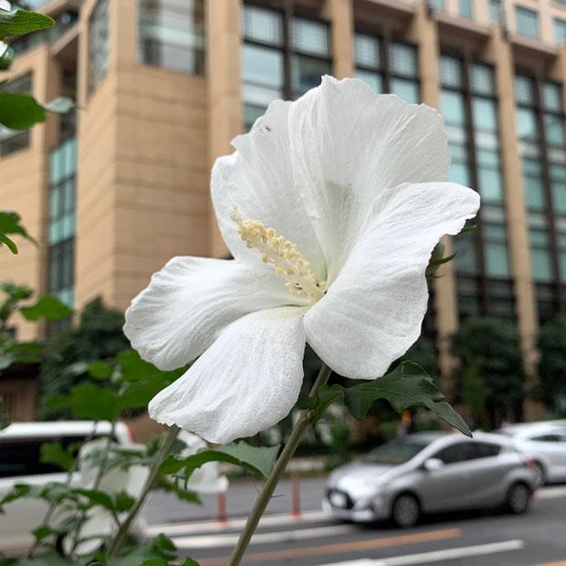 sumomo365_201907_flower_00.jpg