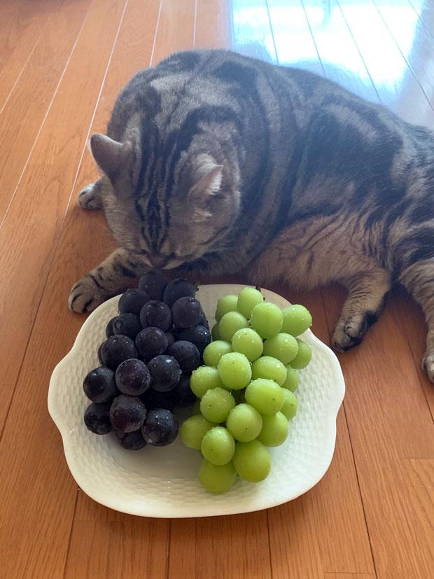 sumomo365_201909_Grape_00.jpg