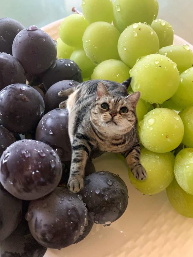 sumomo365_201909_Grape_03.jpg