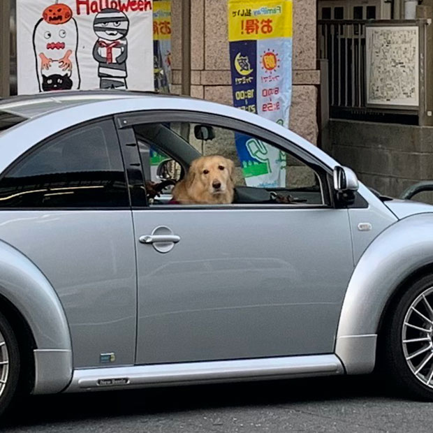 sumomo365_201909_dog_Golden_retriever.jpg