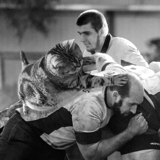 sumomo365_201909_rugby_Scrum_03.jpg