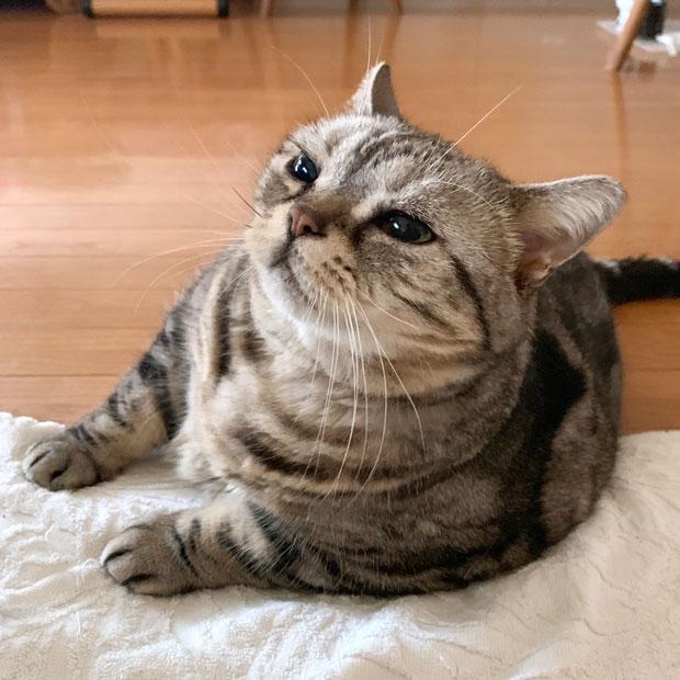 sumomo365_201910_Snuggle_up_00.jpg