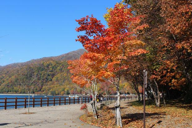 sumomo365_201911_Hokkaido_14a.jpg