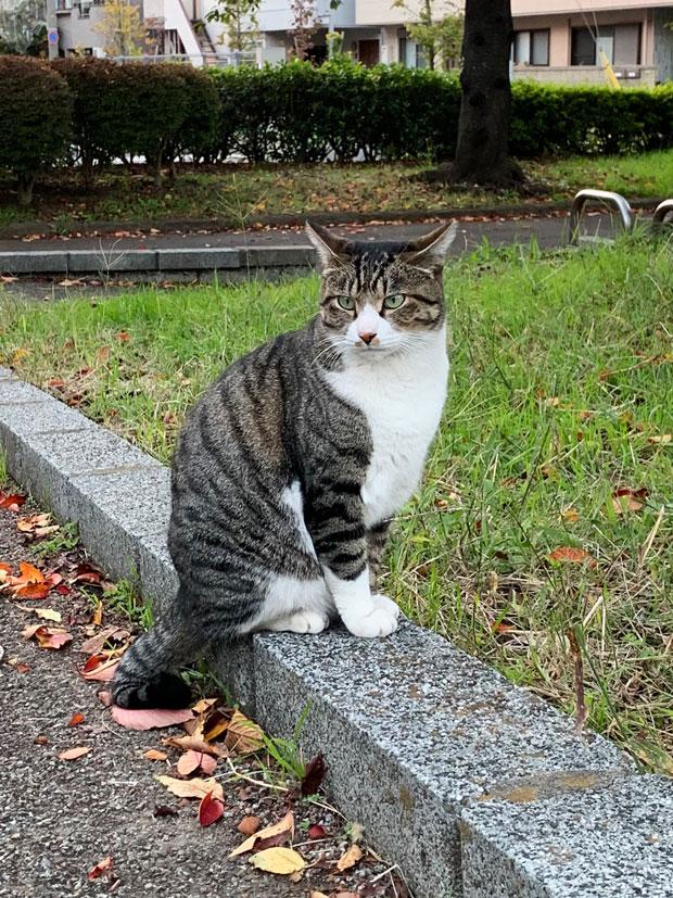 sumomo365_201911_stray_cat_01.jpg