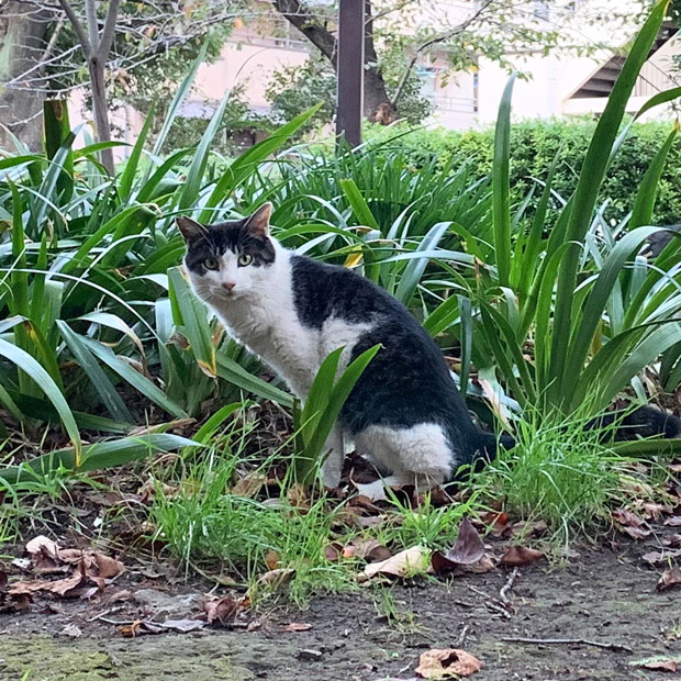 sumomo365_201911_stray_cat_02.jpg
