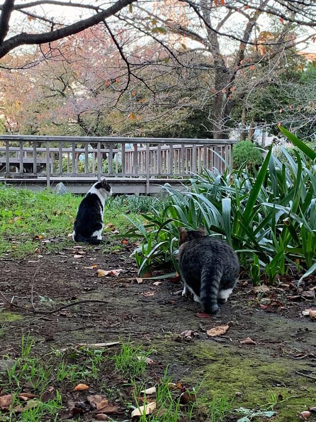 sumomo365_201911_stray_cat_04.jpg