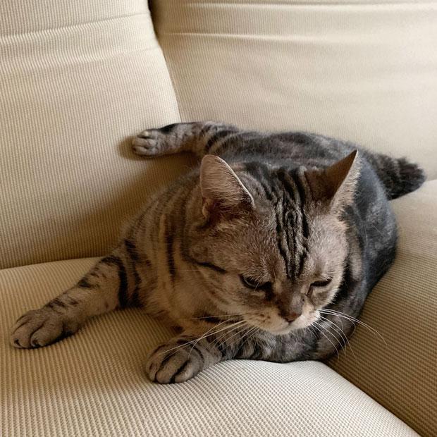 sumomo365_201911_stray_cat_07.jpg