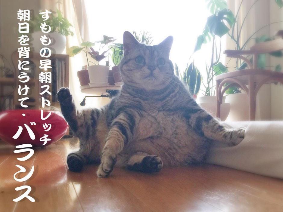 sumomo365_stretch_A.jpg