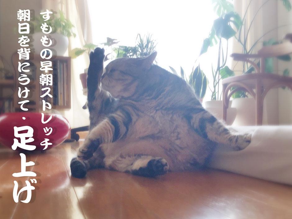 sumomo365_stretch_B.jpg