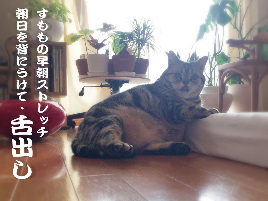 sumomo365_stretch_C.jpg